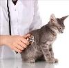 Ветеринарные клиники в Североуральске